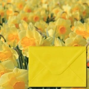 Daffodil Yellow Coloured Envelopes