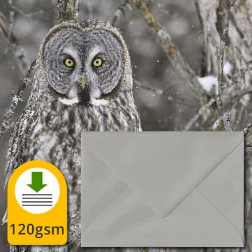 Owl Grey Envelopes